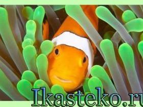 ClownFish для скайпа